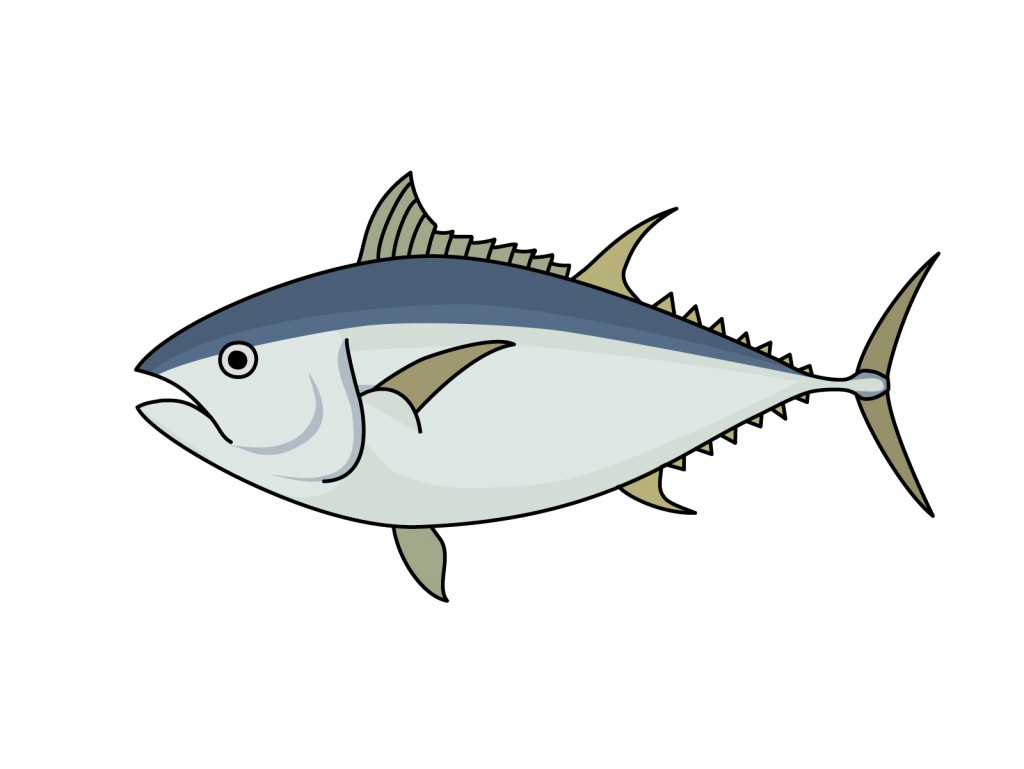 白身魚と赤身魚の違い!実は誤解が多いそれぞれの特徴を徹底解説!