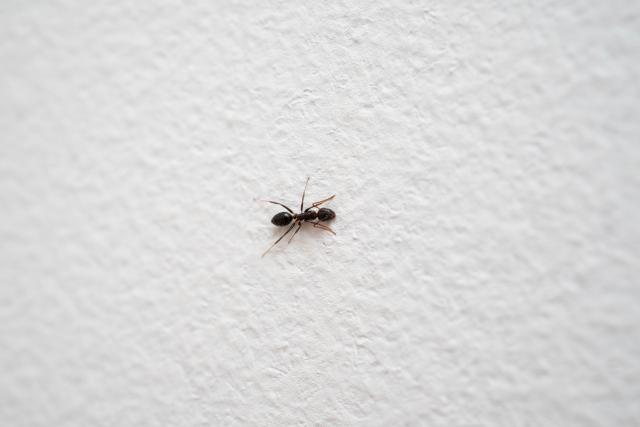 アリの巣コロリの仕組み!効果を上げるための3つのポイント!