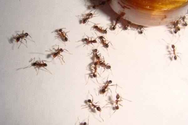 アリの巣コロリが効かない!そんな時に効果抜群な方法はコレ!
